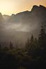 Golden Morning Glory in Yosemite
