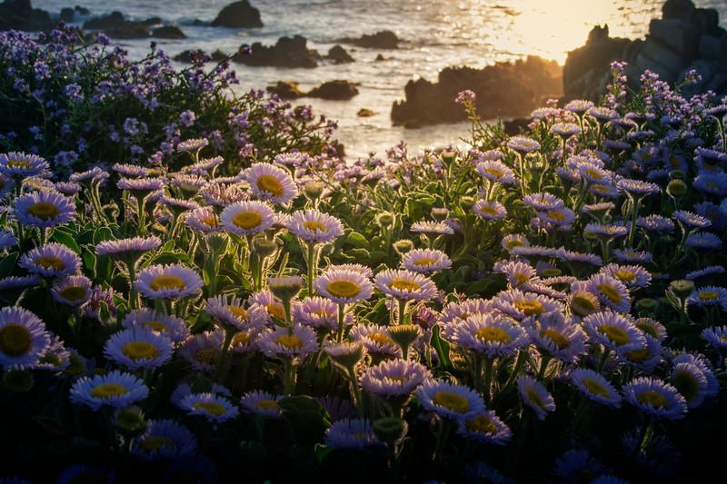 Botanical & Flowers