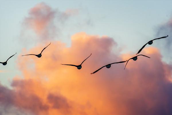 Birds Aglow