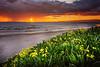 Manresa Rainy Sunset