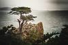 Moody Lone Cypress