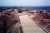 Purple Path in Asilomar