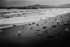 Birds in the Sand at Rio Del Mar