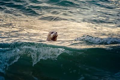 Hello Seal