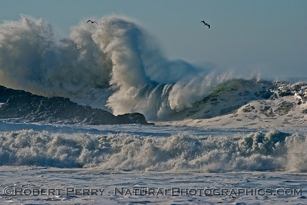 Brown Pelicans fly high as Hurricane Marie storm surf pounds Point Mugu - west side of the rock