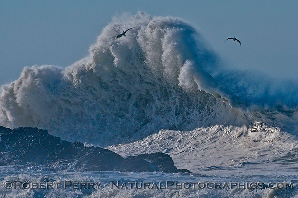 Two brown pelicans soar high as Hurricane Marie storm surf pounds Point Mugu - west side of the rock