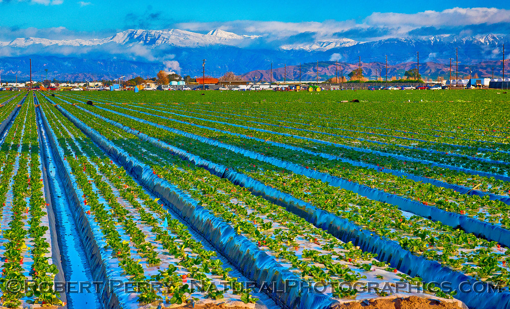 Camarillo Ag fields & snow in back 2016 01-07 Waves & Beaches-a-018