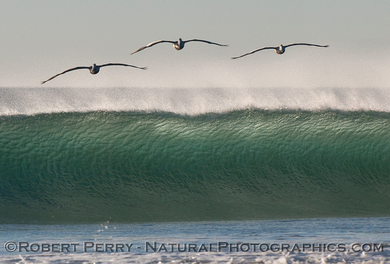 waves Pelecanus offshore wind afternoon sun 2011 01-20 Zuma - 173