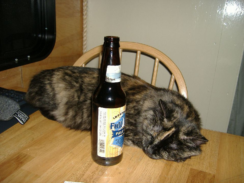 Looks like *someone* can't handle her beer... :-)