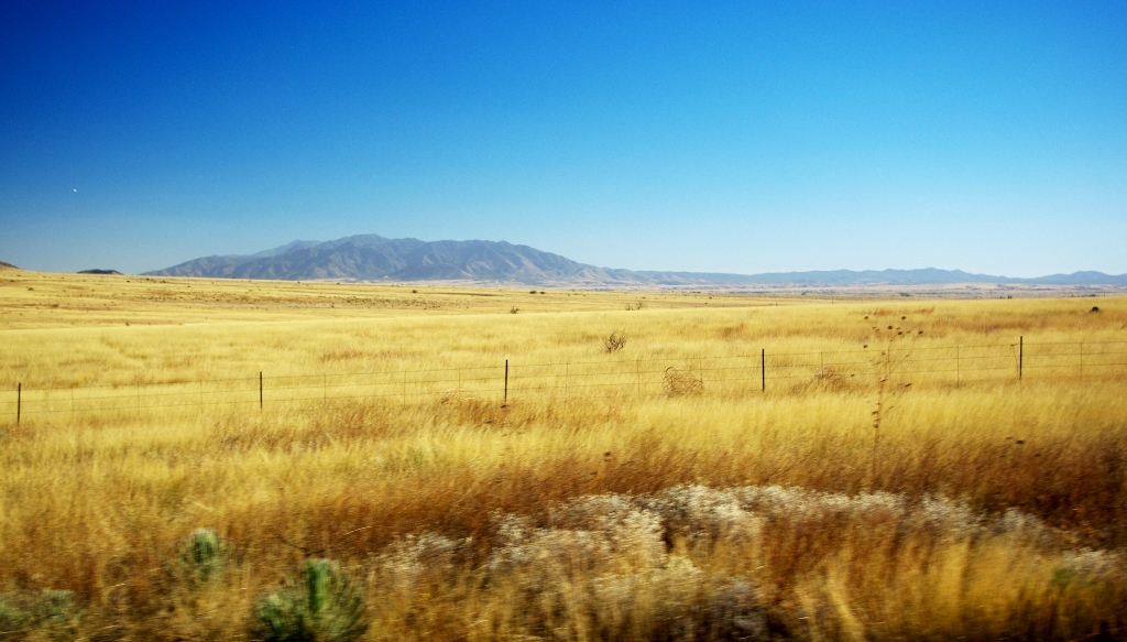 Close to Sonoita, Arizona. The rolling, tawny grasslands extend to Mexico. Nearby in Elgin is a vineyard complete with monk-operated winery.