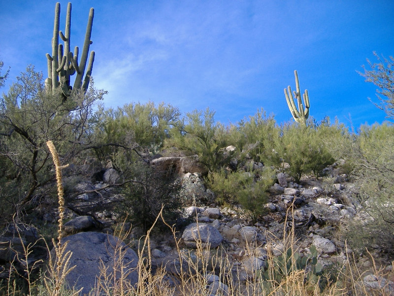 Having set up all of our systems...we went for a walk on one of the many local trails. Beautiful Sonoran desert flora surrounded us.