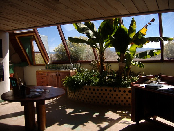 Indoor graywater planter with fruiting banana trees. The south-facing windows provide a year-round greenhouse environment. The graywater feeds from the kitchen sink to the left of the planter.