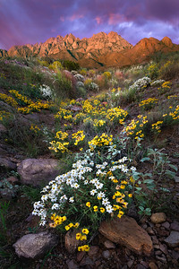 The  Colors Of The Summer Desert