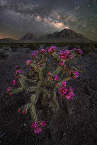 Night Of The Cholla