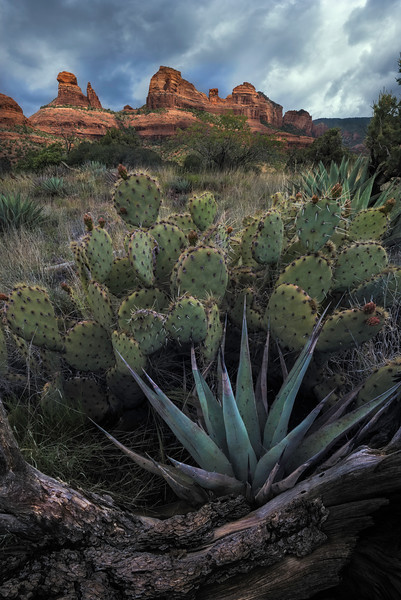 Sedona Agave and Prickly Pear