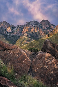 Organ Peaks In Sunlight
