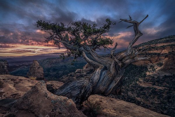 The Tree That Danced At Sunrise
