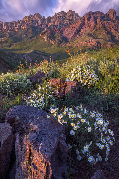 Organ Mountain Splendor