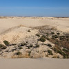 Monahans Sandhills SP: Dune Walk