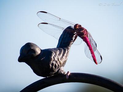 Gulf Waters RV Resort - Port Aransas, Texas. Dragonfly 15 Oct 2014