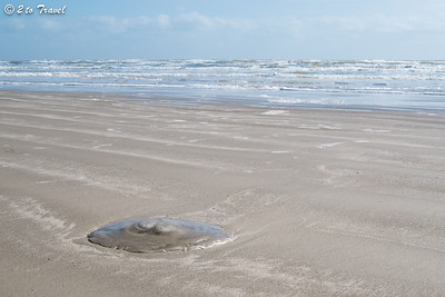 On the beach at Gulf Waters RV Resort in Port Aransas; this is a jellyfish kind of day. 4 Jan 2014