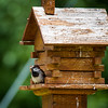 Deer Crossing RV Park - House Sparrow