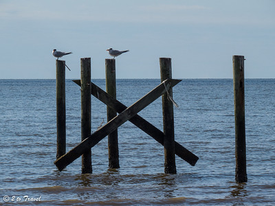 Remnants of the old piers make excellent perches for the birds -- in this case, a pair of Royal Terns. Waveland, MS - 7 Apr 2013
