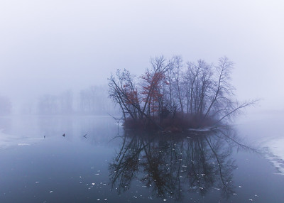 Fog Island Goshen