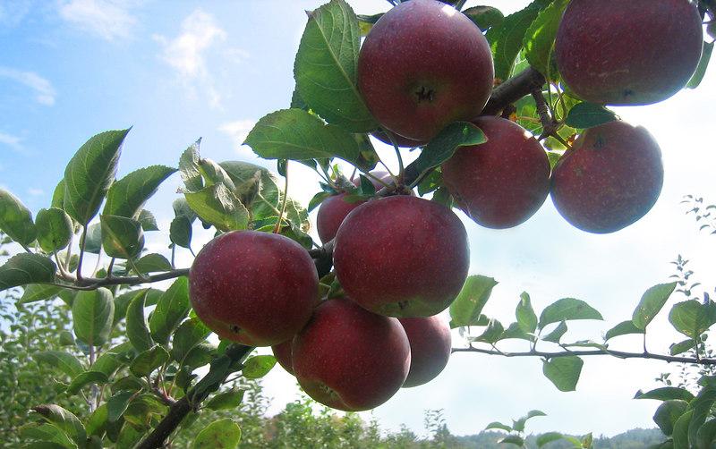 Peak Orchards Henniker NH