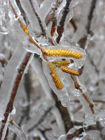 Ice Storm Weare NH 2008