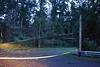 Hamlin Tree