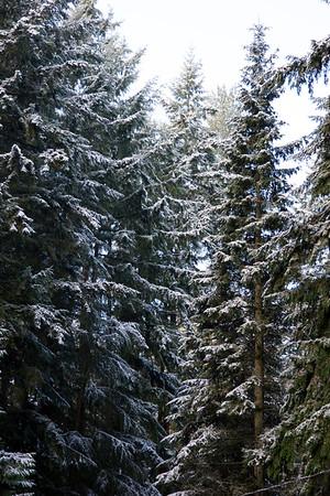 Shoreline Snow 2014-11-29