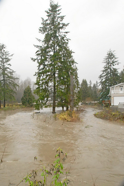Snapshot gallery of images from southwest Snohomish County during the urban flooding brought on by heavy rains. Images include North Creek, Swamp Creek and Lake Ballinger. Image Copyright © 2007 J. Andrew Towell All Rights Reserved. Please contact the copyright holder at troutstreaming@gmail.com to discuss any and all usage rights.