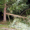 12  Tree Snapped @ NE 49th Ave and 55th Circle