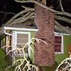 10  Wietzels Tree on House V
