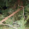 20  Tree Snapped Near NE 66th Ave