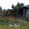 35  G Tree Down on Multiple Cars NE 28th Ave and NE 49th Street