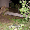 15  Pine Tree Uprooted NE 51st Street and NE 56th Ave