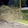 23  Downed Lines and Trees NE 49th Street and Chateau Drive