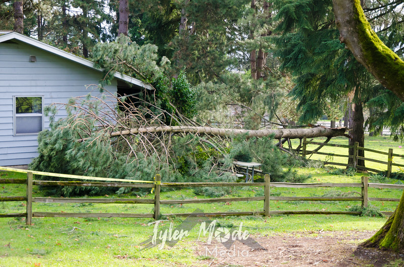 55  G Downed Tree On Home Officers Row