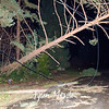 22  Downed Lines and Trees NE 49th Street and Chateau Drive