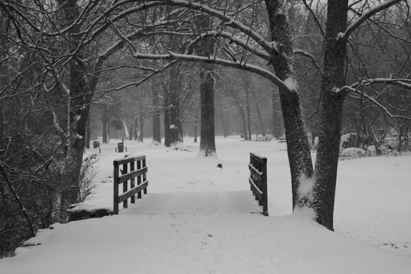 1st Snow 2009