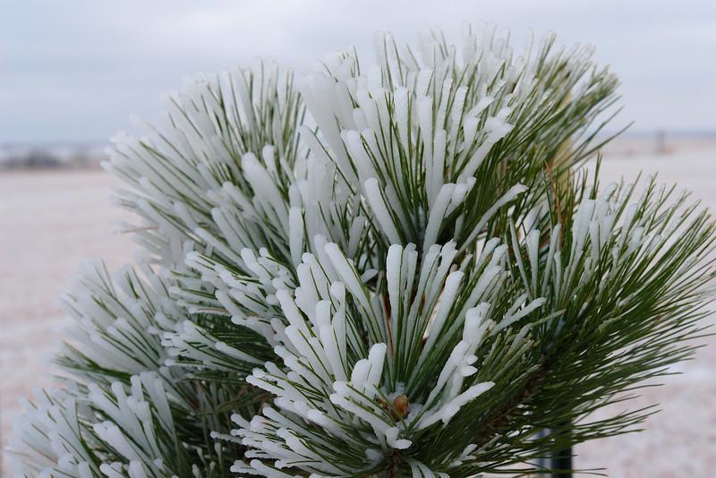 2007 Ice storm 001