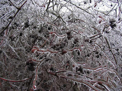2008 Winter Ice Storm