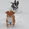 Scraps and Rags in the Snow1.jpg