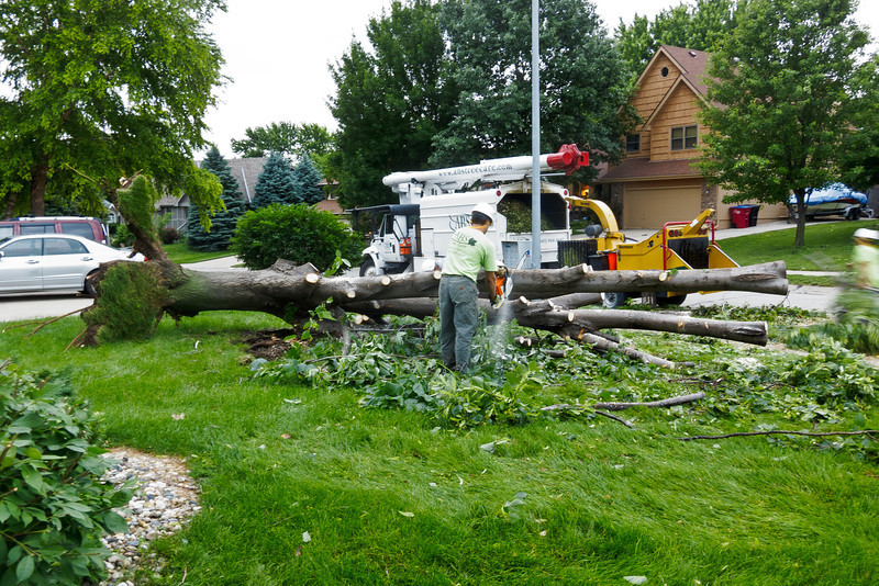 The tree service made quick work of it.
