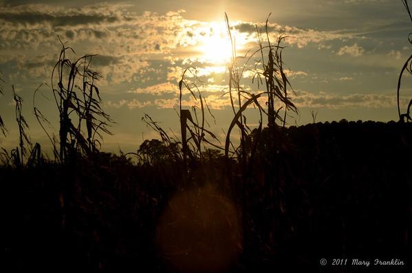 2011 Sunset