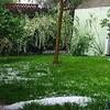 """Back yard with newly blooming bridal veil bush and a load of hail.<br /> Unser Garten mit dem """"Brautschleier""""hinten am Zaun, und vorne eine Ladung Hagel"""