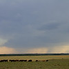 5:06 pm | 3 mi NW of Mutual, OK<br /> <br /> Lot of moo's.