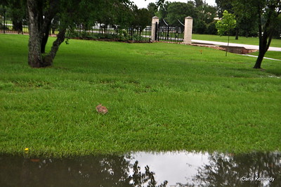 2015 05-26 thru 28th Rain Rain Go Away